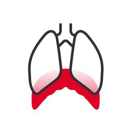 Atemtechnik Icon: Lunge und ein hervorgehobenes Zwerchfell